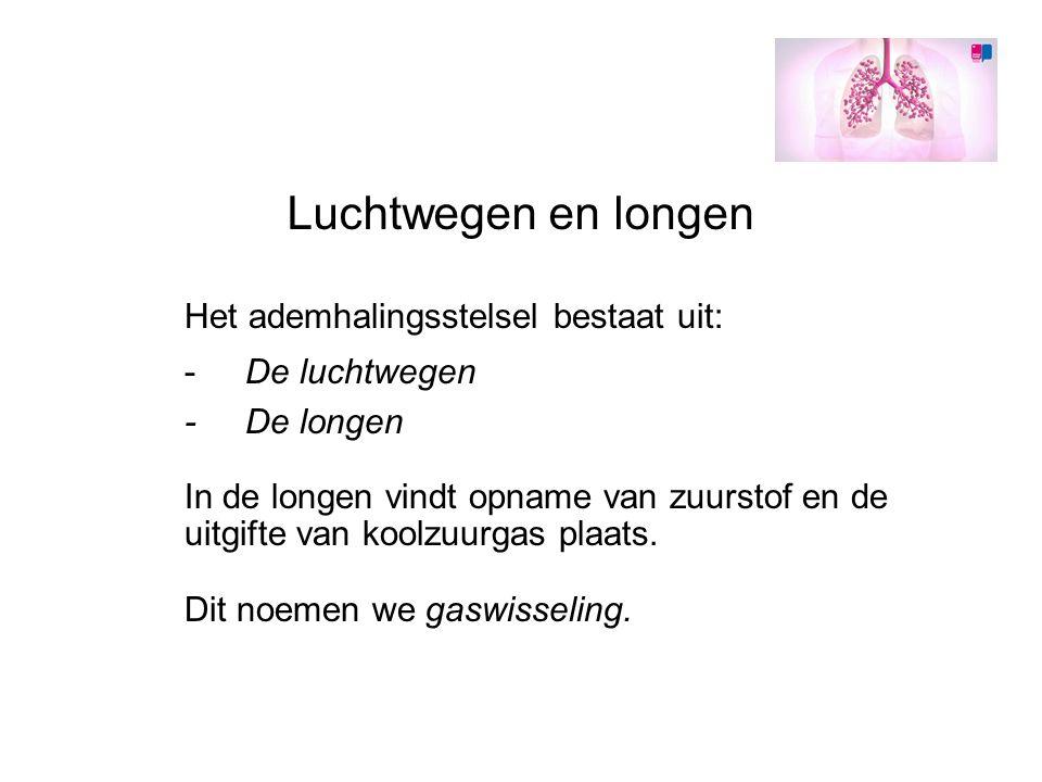 Luchtwegen en longen Het ademhalingsstelsel bestaat uit: