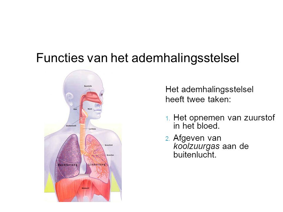 Functies van het ademhalingsstelsel