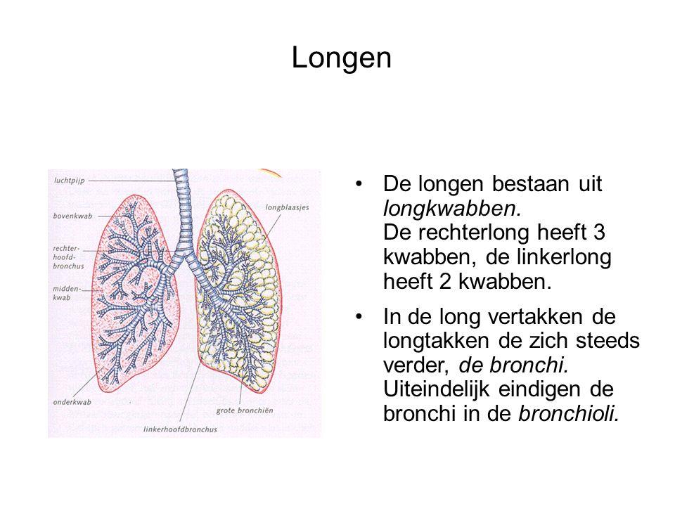 Longen De longen bestaan uit longkwabben. De rechterlong heeft 3 kwabben, de linkerlong heeft 2 kwabben.