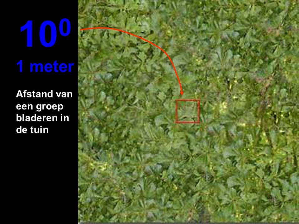 100 1 meter Afstand van een groep bladeren in de tuin