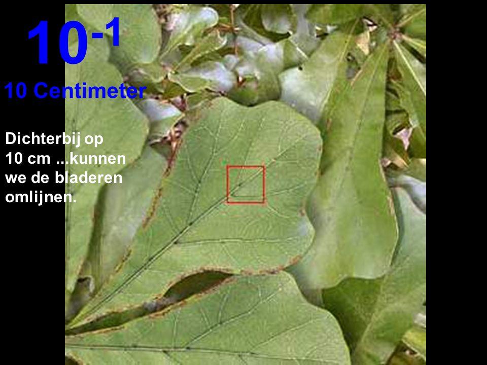 10-1 10 Centimeter Dichterbij op 10 cm ...kunnen we de bladeren omlijnen.