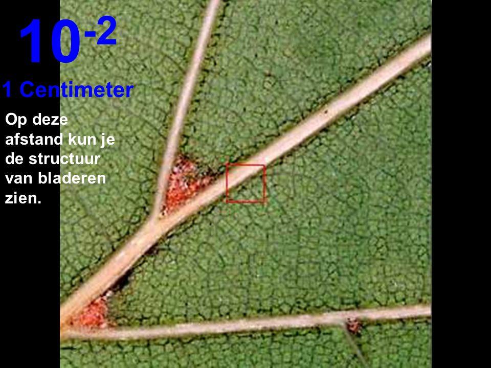 10-2 1 Centimeter Op deze afstand kun je de structuur van bladeren zien.