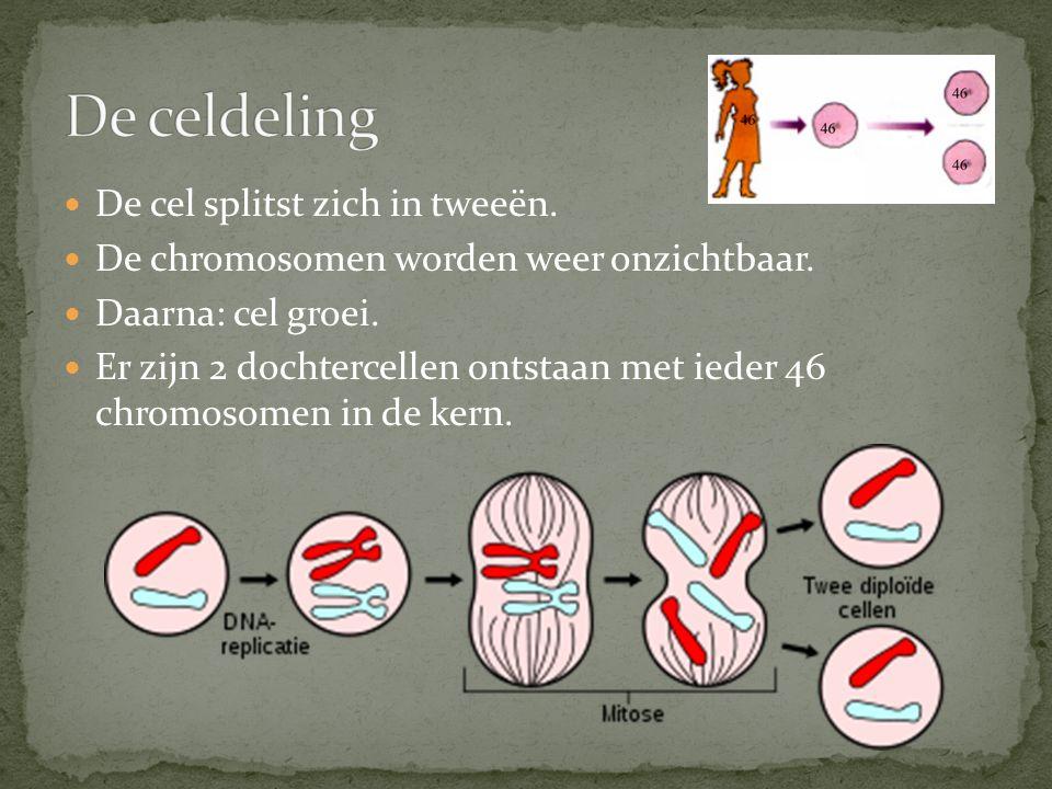 De celdeling De cel splitst zich in tweeën.