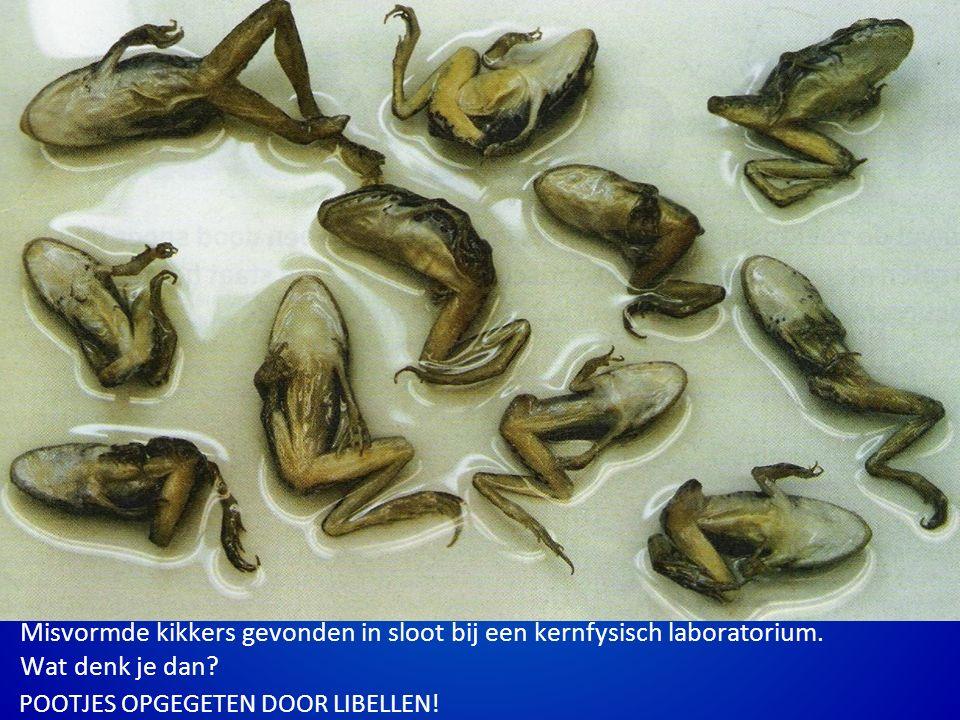 Misvormde kikkers gevonden in sloot bij een kernfysisch laboratorium.
