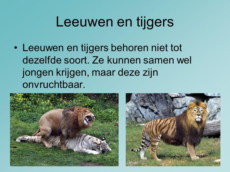 Leeuwen en tijgers Leeuwen en tijgers behoren niet tot dezelfde soort.