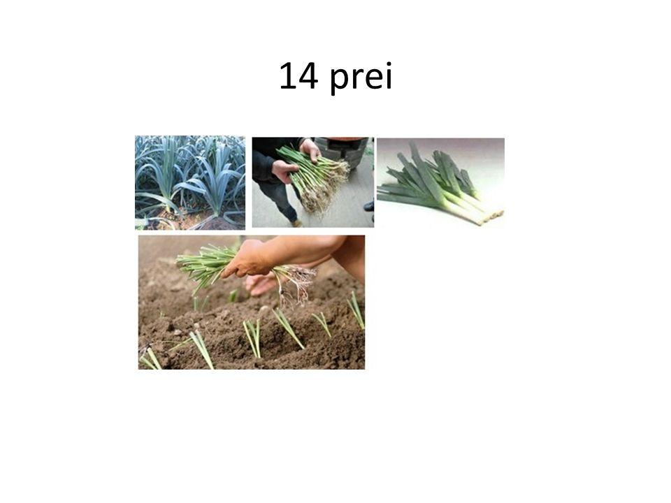 14 prei