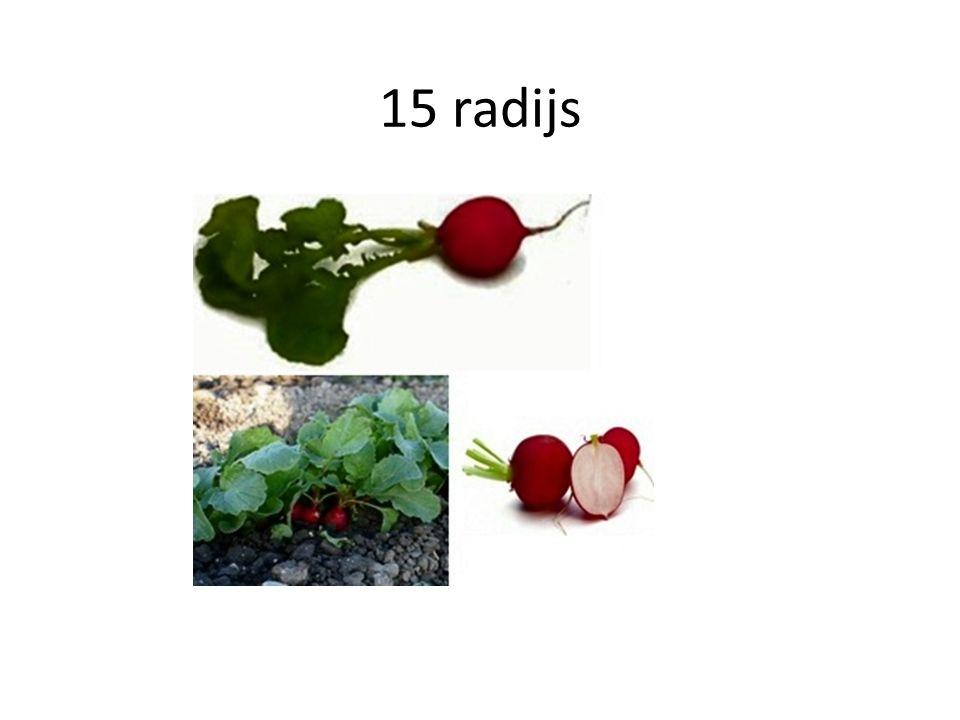 15 radijs