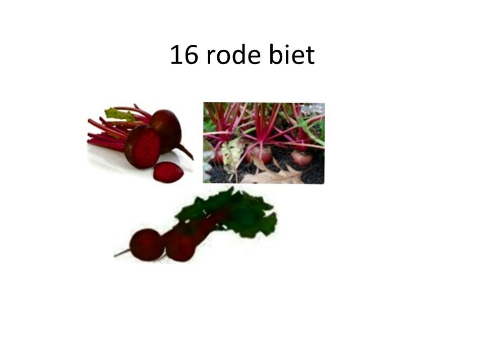 16 rode biet