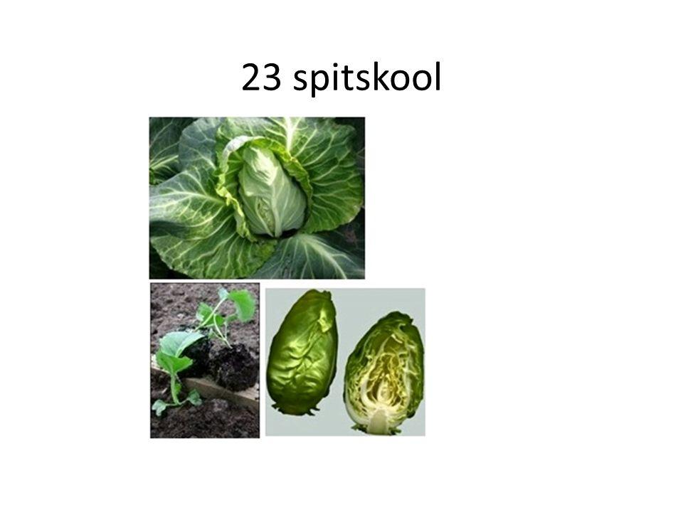 23 spitskool