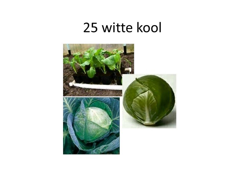 25 witte kool