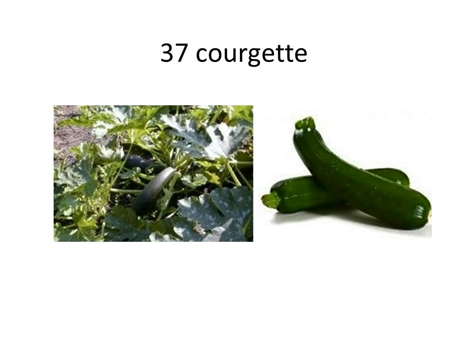 37 courgette