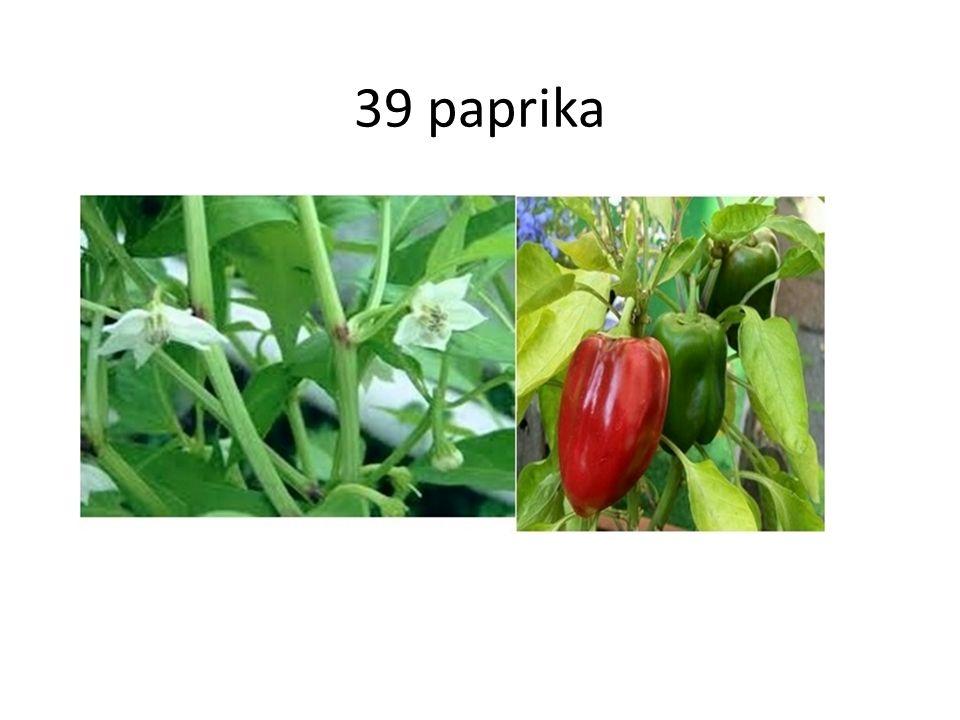 39 paprika