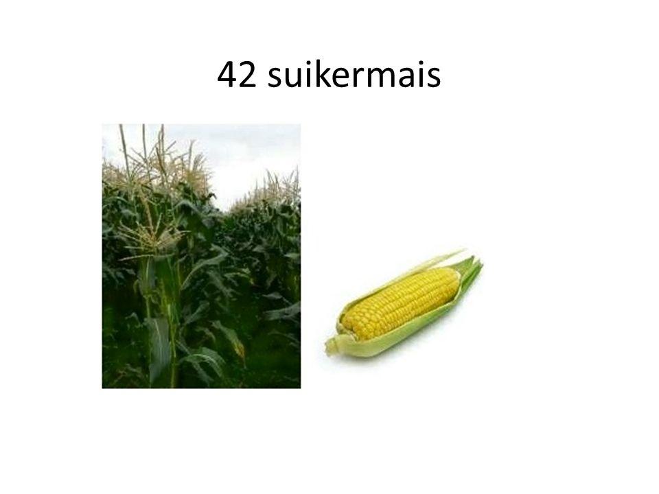 42 suikermais