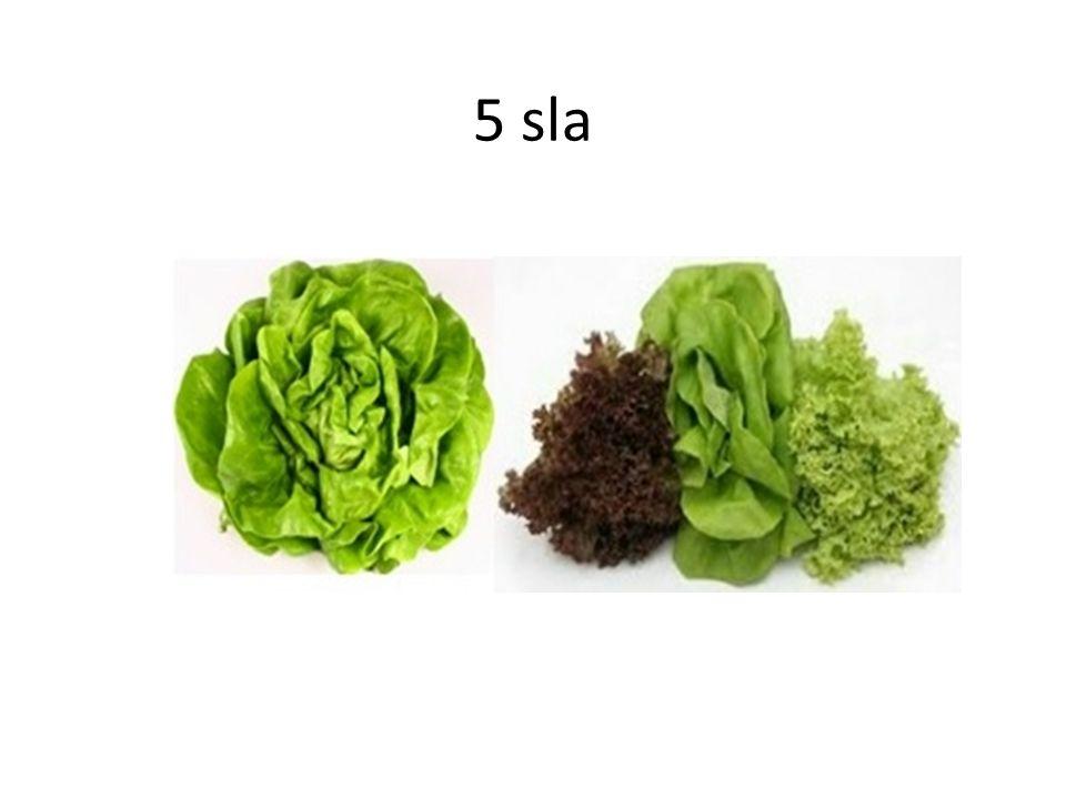 5 sla