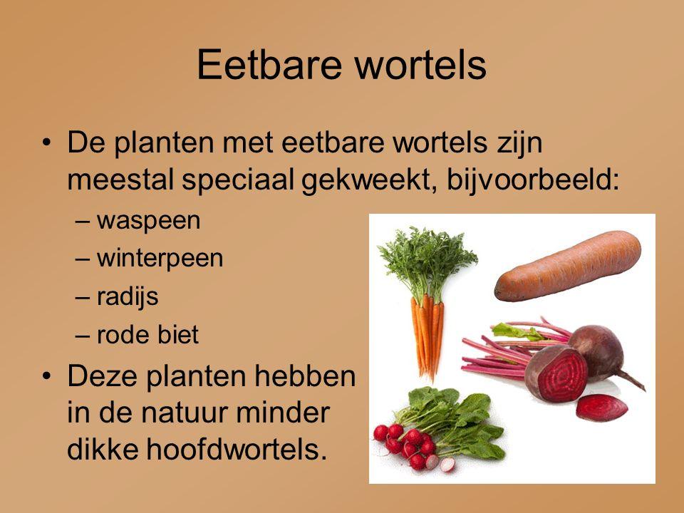 Eetbare wortels De planten met eetbare wortels zijn meestal speciaal gekweekt, bijvoorbeeld: waspeen.