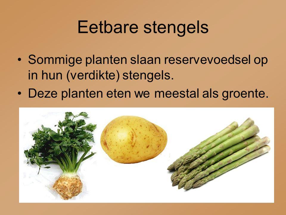 Eetbare stengels Sommige planten slaan reservevoedsel op in hun (verdikte) stengels.