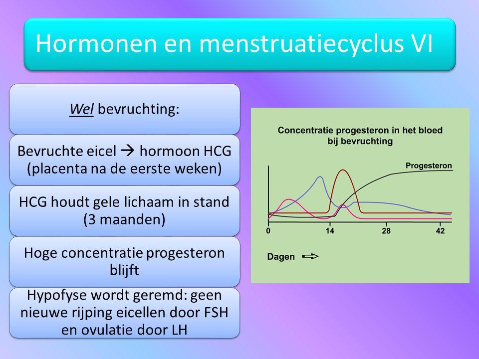 Bevruchte eicel  hormoon HCG (placenta na de eerste weken)