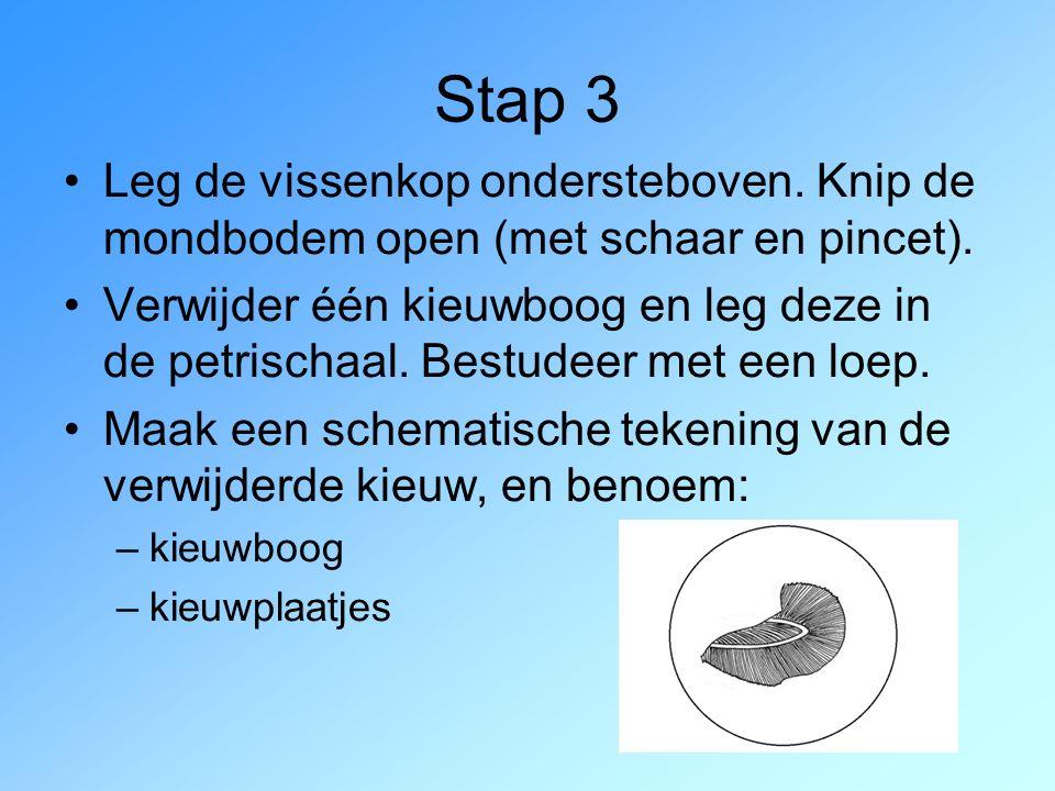 Stap 3 Leg de vissenkop ondersteboven. Knip de mondbodem open (met schaar en pincet).