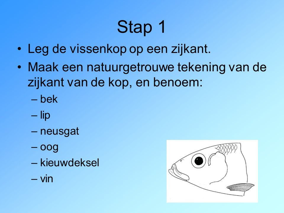 Stap 1 Leg de vissenkop op een zijkant.