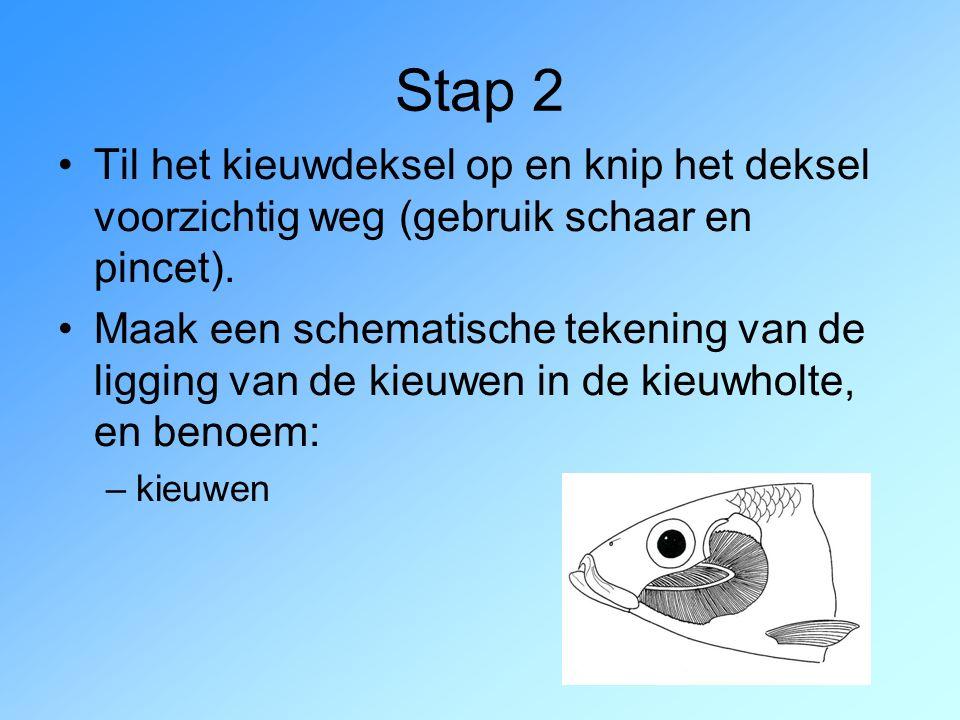 Stap 2 Til het kieuwdeksel op en knip het deksel voorzichtig weg (gebruik schaar en pincet).