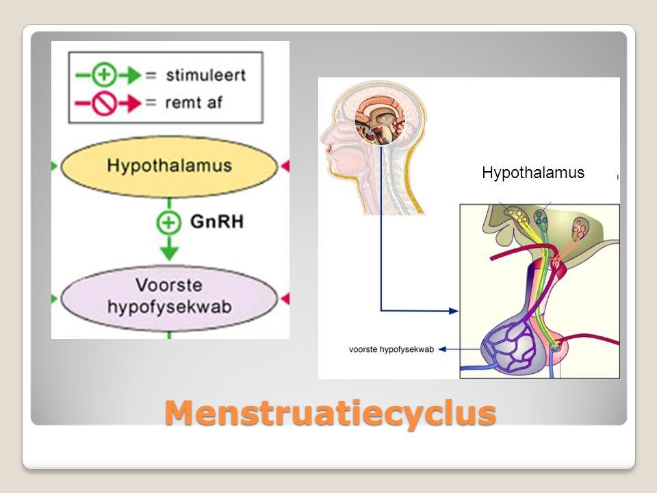 Hypothalamus Menstruatiecyclus