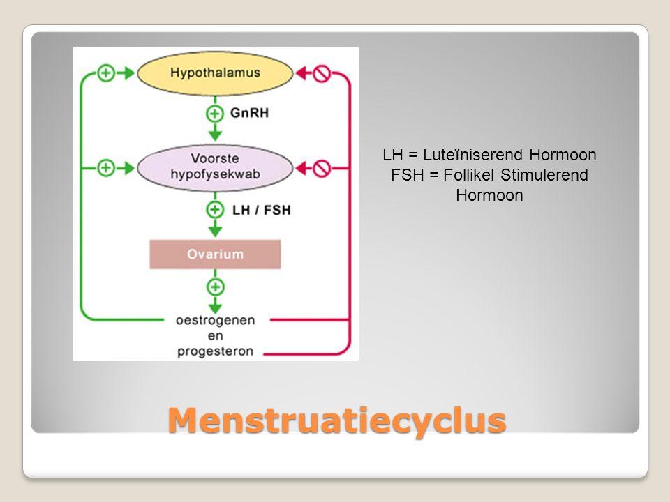 Menstruatiecyclus LH = Luteïniserend Hormoon