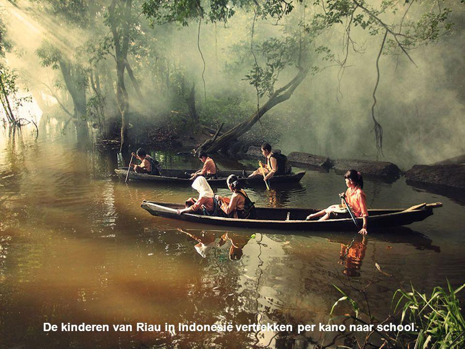 De kinderen van Riau in Indonesië vertrekken per kano naar school.