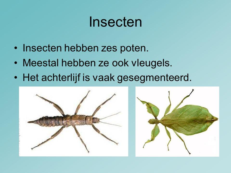 Insecten Insecten hebben zes poten. Meestal hebben ze ook vleugels.