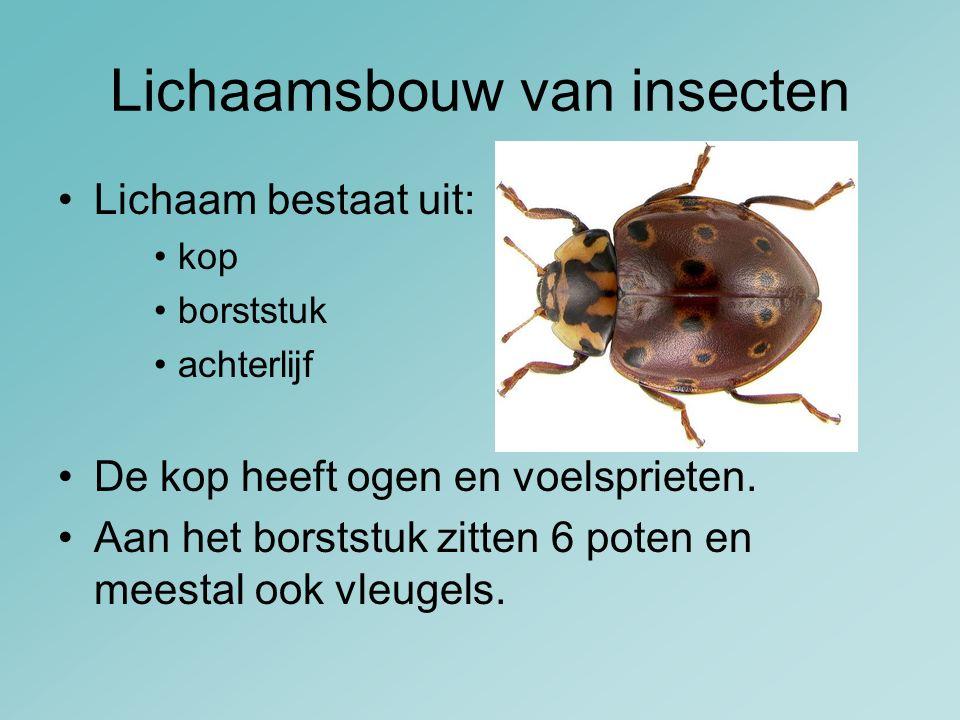 Lichaamsbouw van insecten