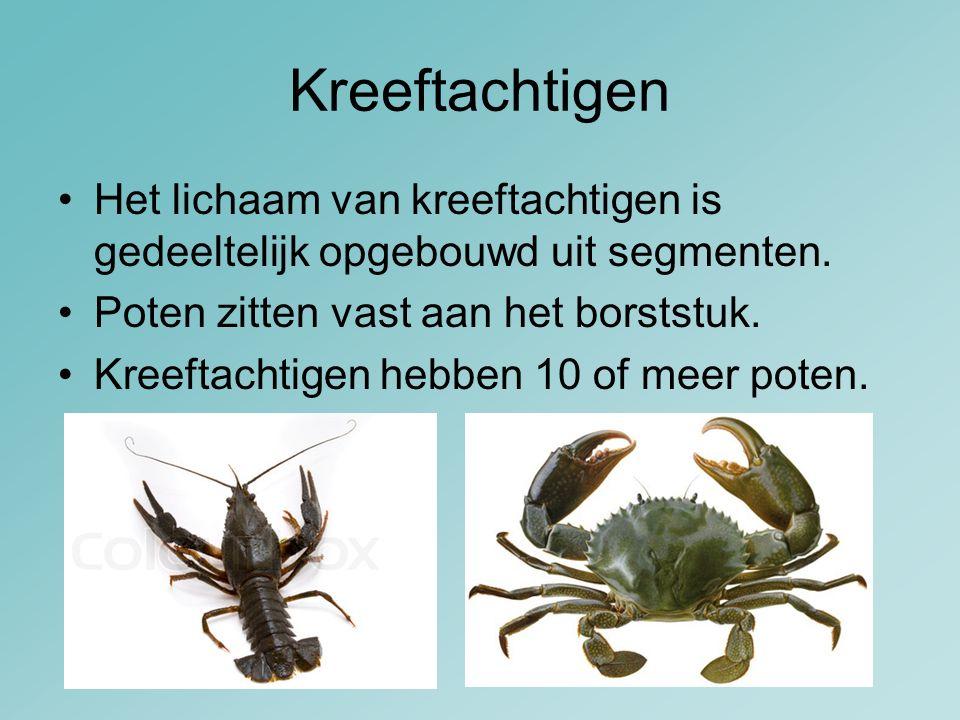 Kreeftachtigen Het lichaam van kreeftachtigen is gedeeltelijk opgebouwd uit segmenten. Poten zitten vast aan het borststuk.