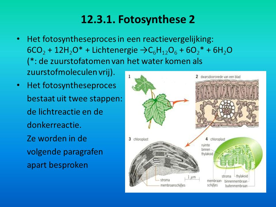 12.3.1. Fotosynthese 2