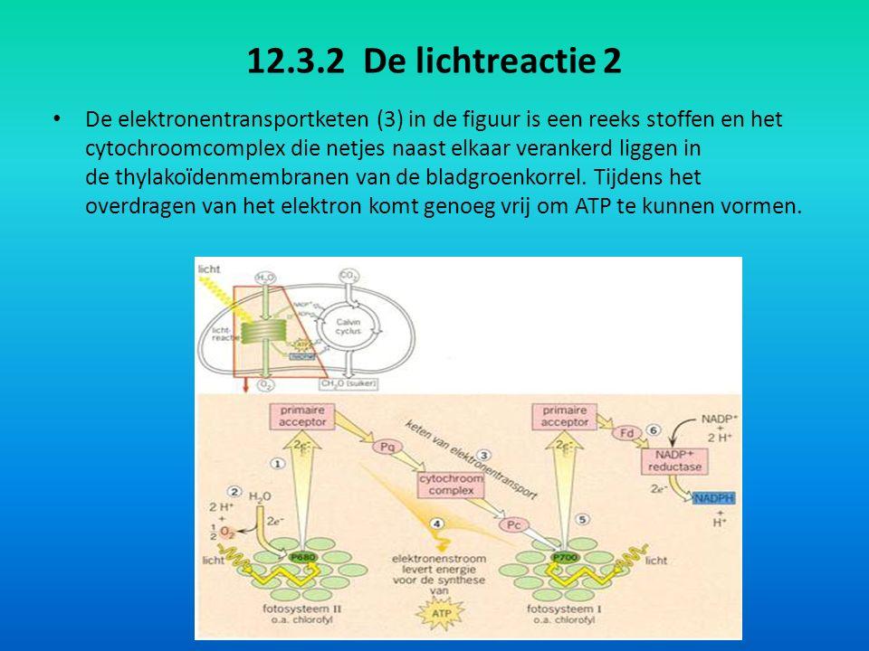 12.3.2 De lichtreactie 2