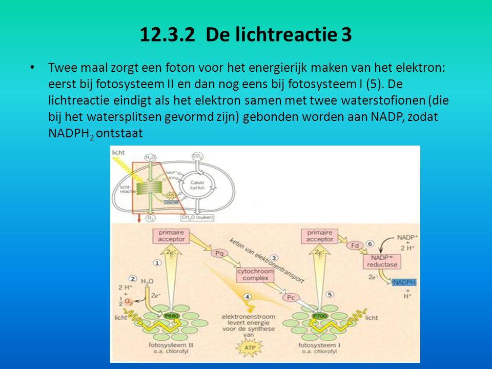 12.3.2 De lichtreactie 3