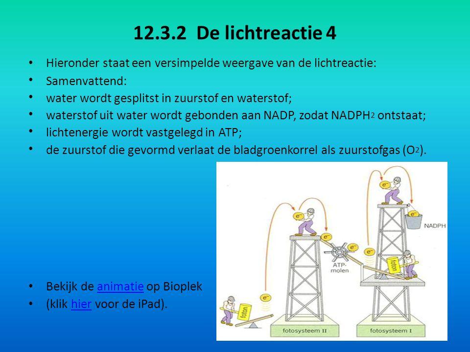 12.3.2 De lichtreactie 4 Hieronder staat een versimpelde weergave van de lichtreactie: Samenvattend: