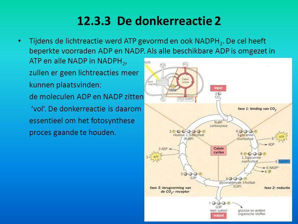 12.3.3 De donkerreactie 2