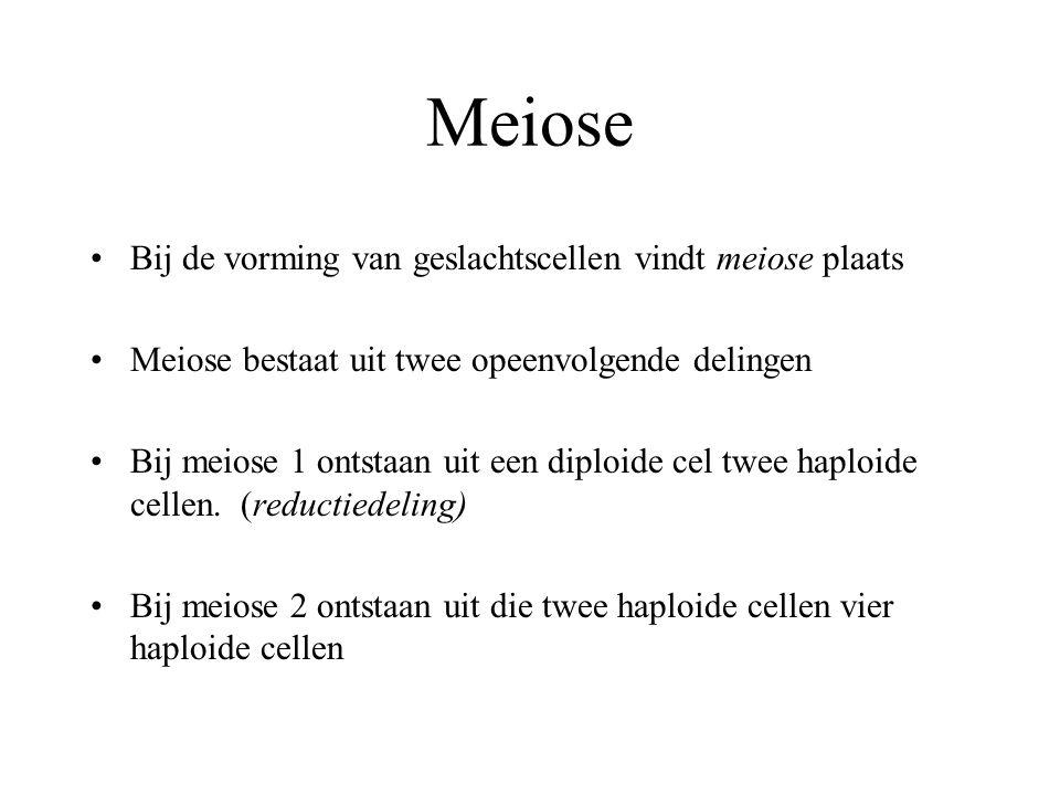 Meiose Bij de vorming van geslachtscellen vindt meiose plaats