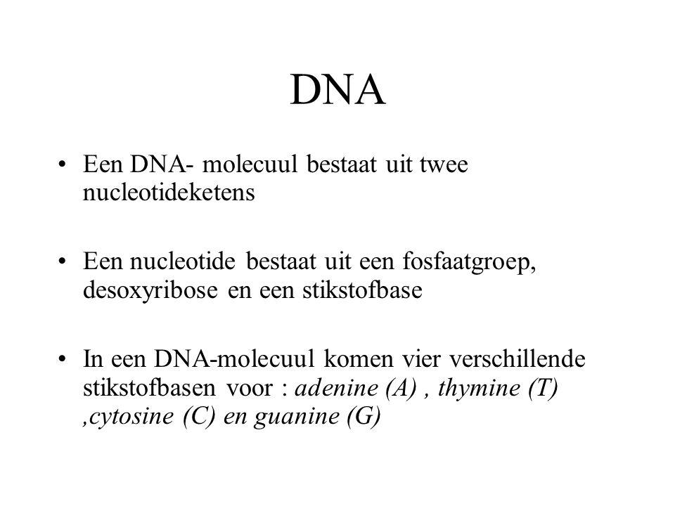 DNA Een DNA- molecuul bestaat uit twee nucleotideketens
