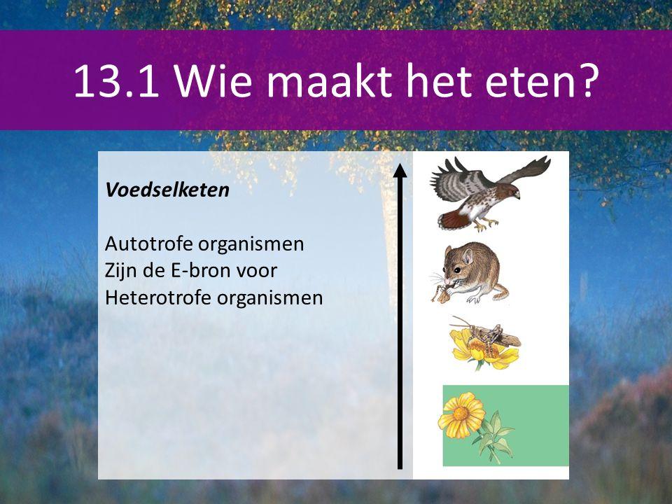 13.1 Wie maakt het eten Voedselketen Autotrofe organismen