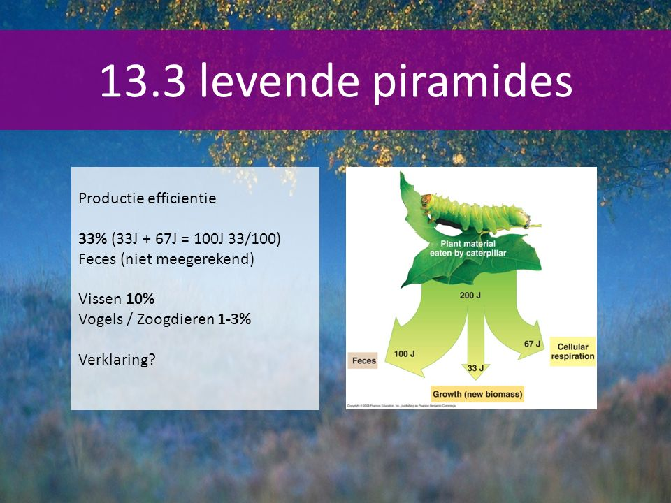 13.3 levende piramides Productie efficientie
