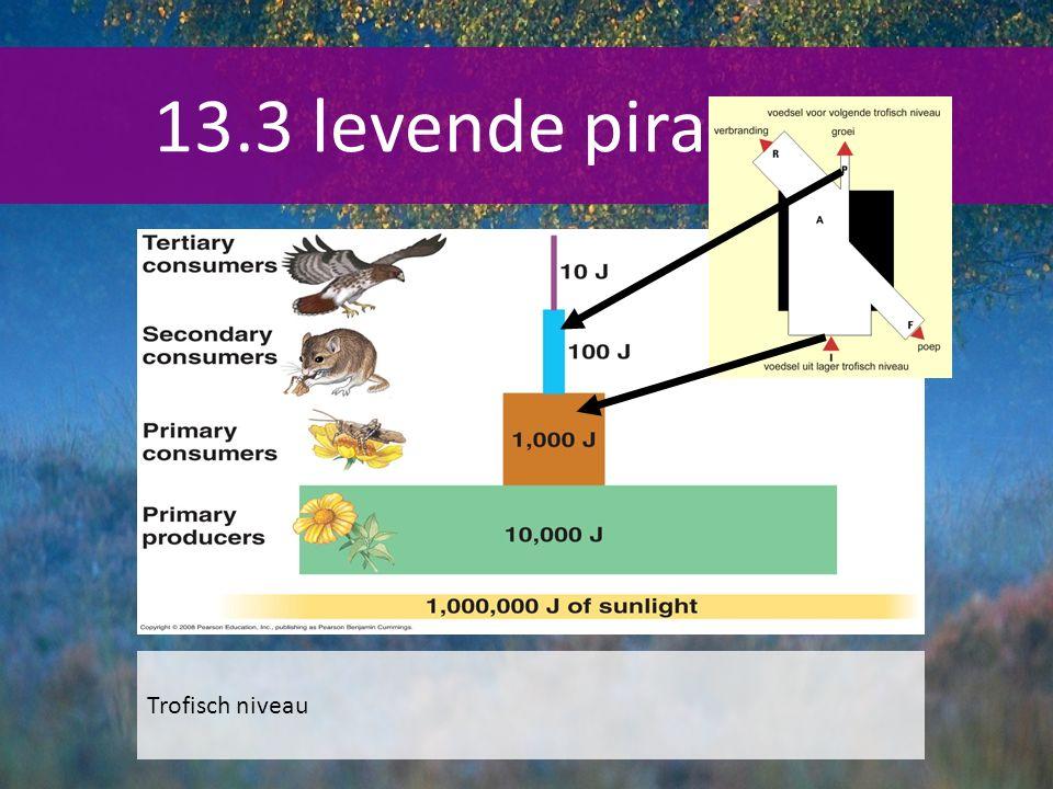 13.3 levende piramides Trofisch niveau