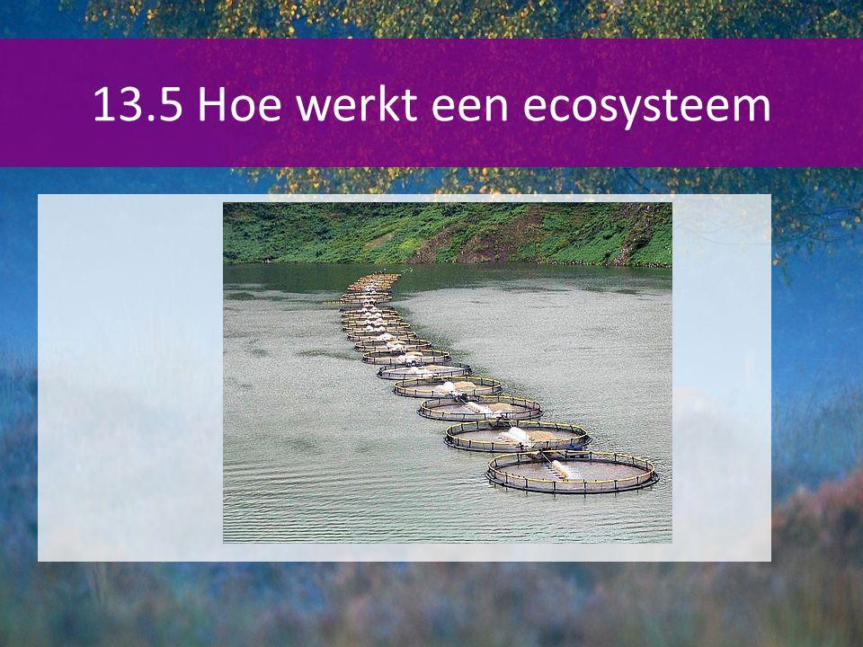 13.5 Hoe werkt een ecosysteem