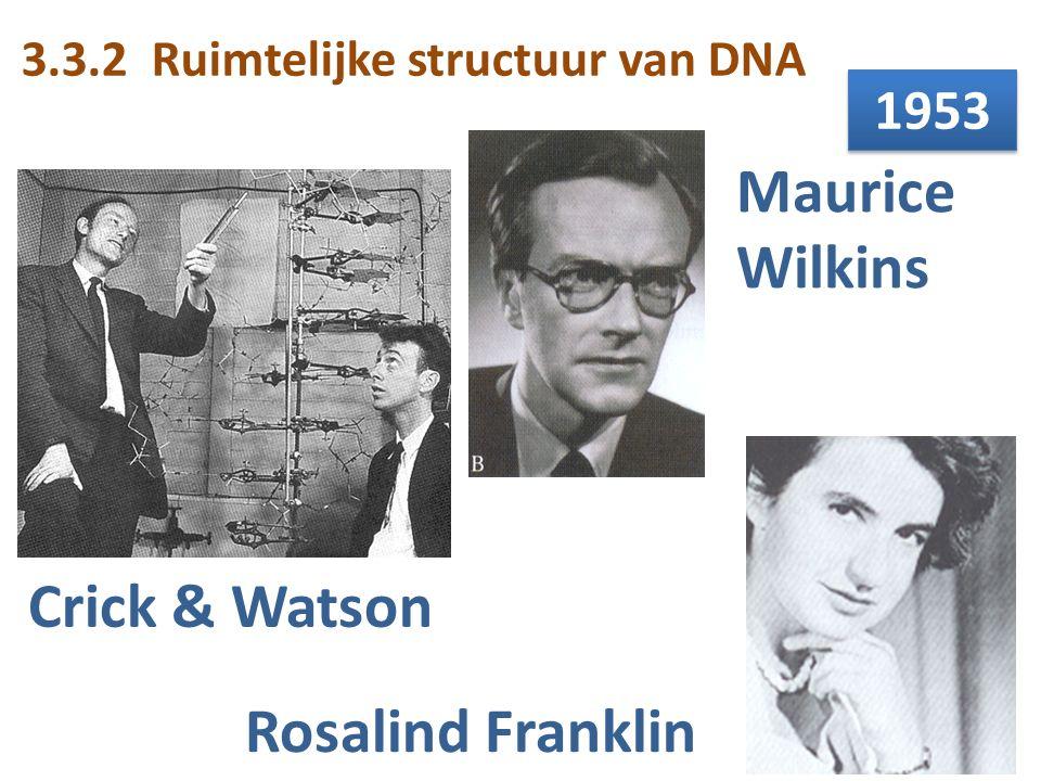Maurice Wilkins Crick & Watson Rosalind Franklin 1953