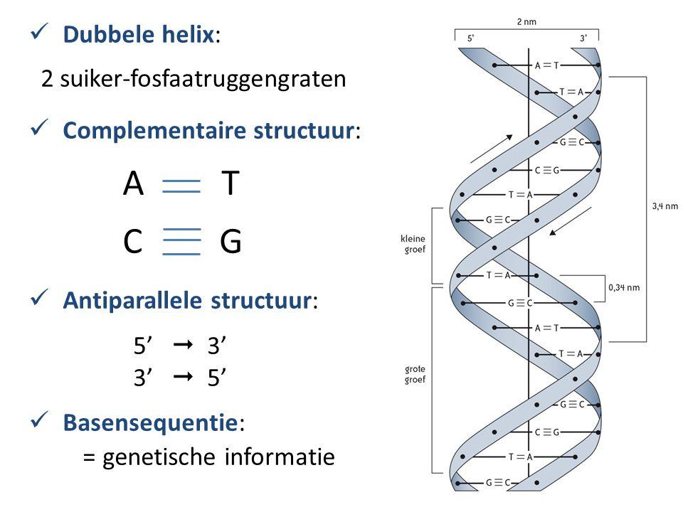 A T C G Dubbele helix: 2 suiker-fosfaatruggengraten