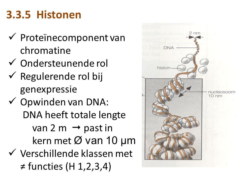 3.3.5 Histonen Proteïnecomponent van chromatine Ondersteunende rol