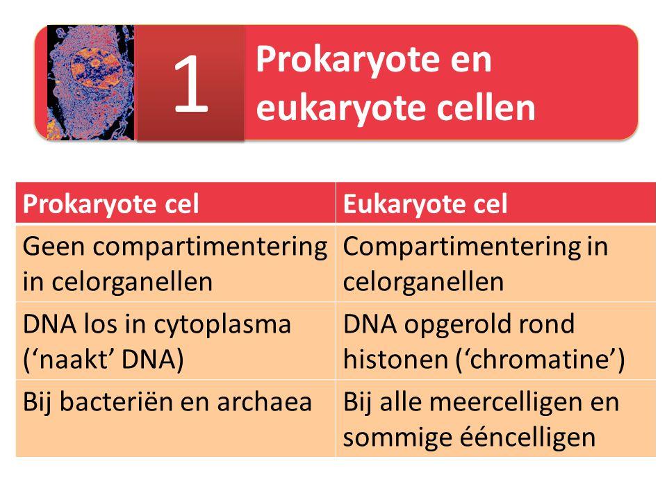 1 Prokaryote cel Eukaryote cel Geen compartimentering in celorganellen