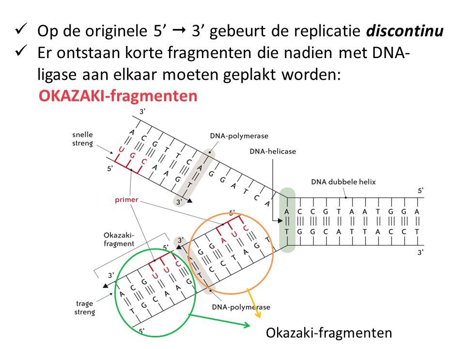 Op de originele 5'  3' gebeurt de replicatie discontinu