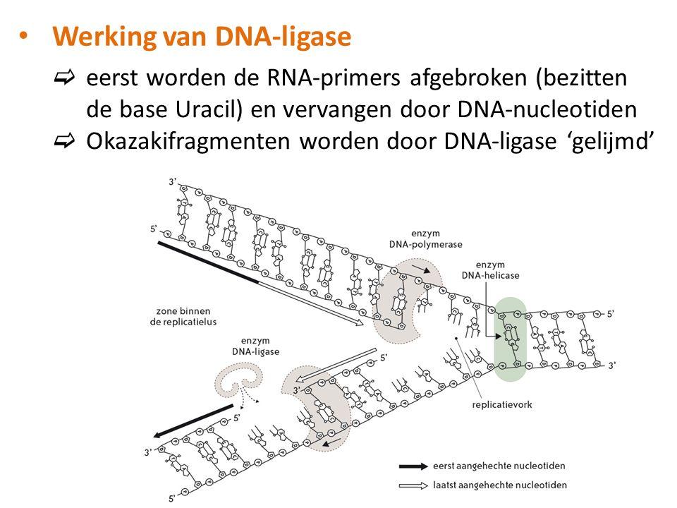 Werking van DNA-ligase