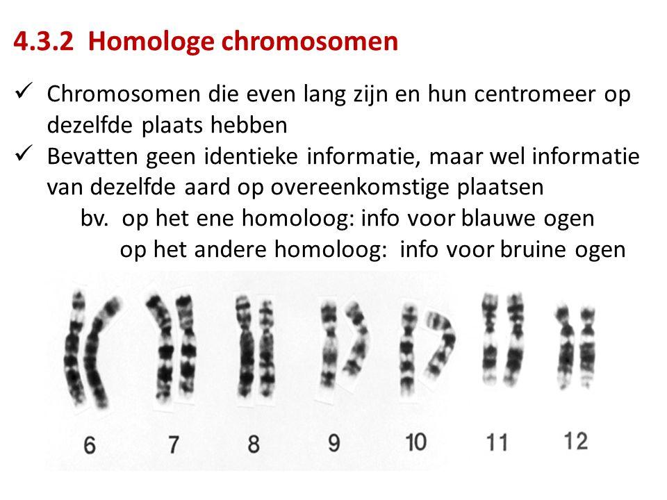 4.3.2 Homologe chromosomen Chromosomen die even lang zijn en hun centromeer op dezelfde plaats hebben.