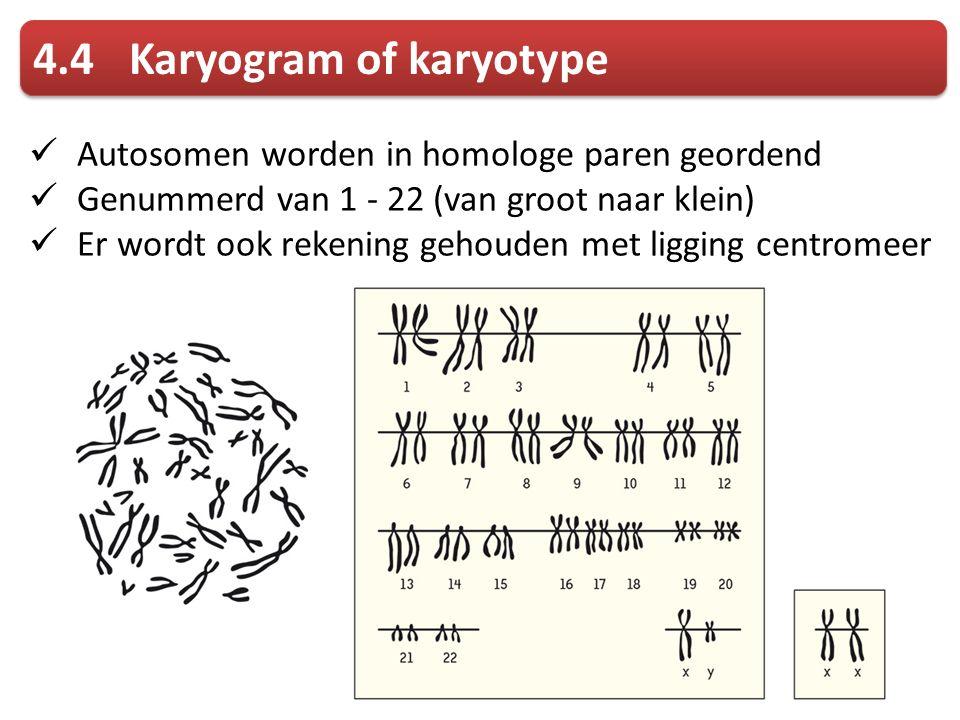 4.4 Karyogram of karyotype