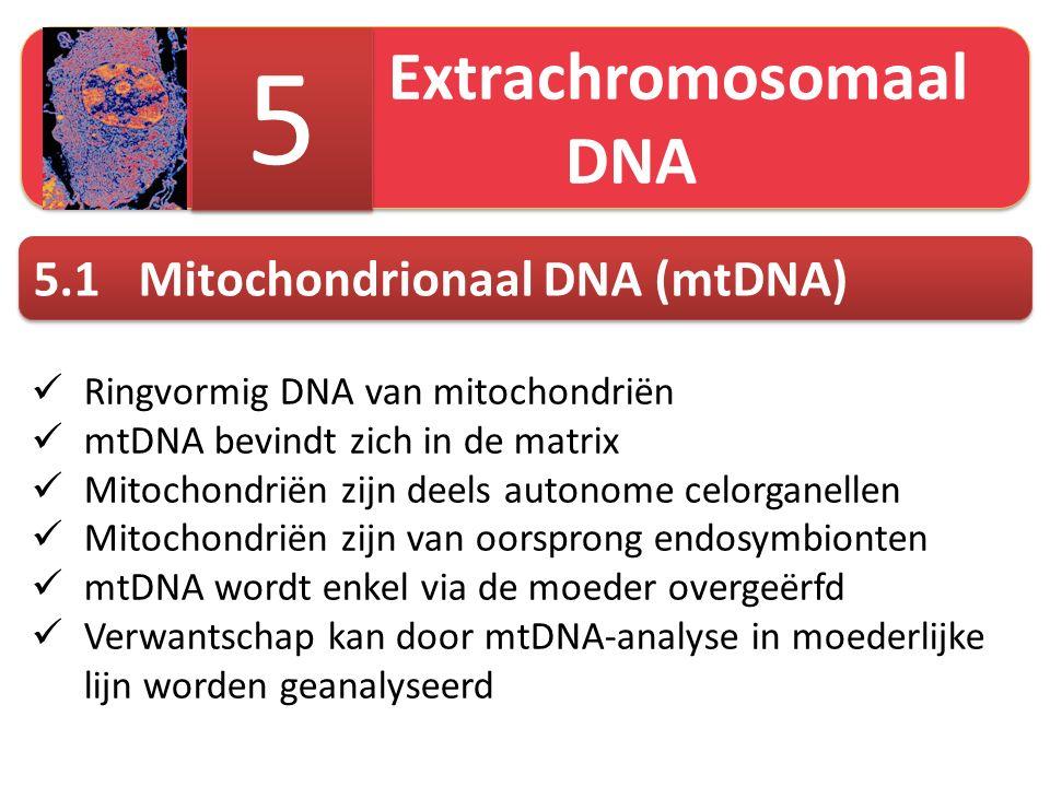 5 5.1 Mitochondrionaal DNA (mtDNA) Extrachromosomaal DNA